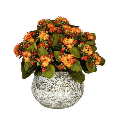 Artificial Kalanchoe in Distressed Cement Vase - House of Silk Flowers®