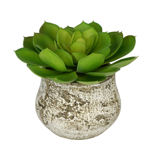Artificial Echevaria Succulent in Distressed Cement Vase - House of Silk Flowers®