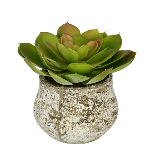 Artificial Echevaria Succulent in Distressed Cement Vase - House of Silk Flowers®  - 2
