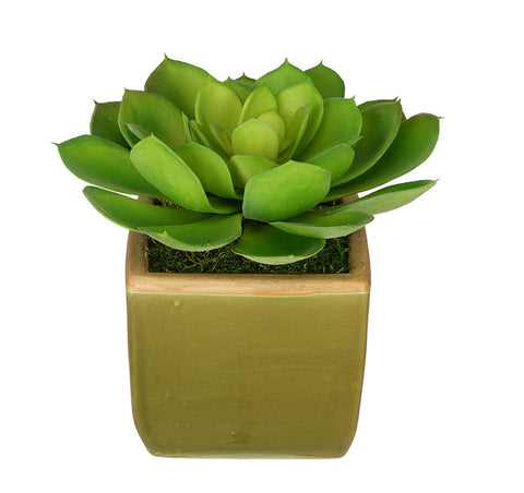 Artificial Echevaria Succulent in Olive Green Ceramic Vase