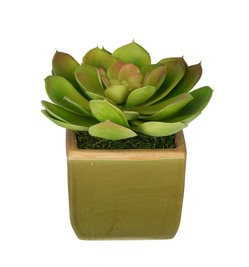 Artificial Echevaria Succulent in Olive Green Ceramic Vase - House of Silk Flowers®  - 4