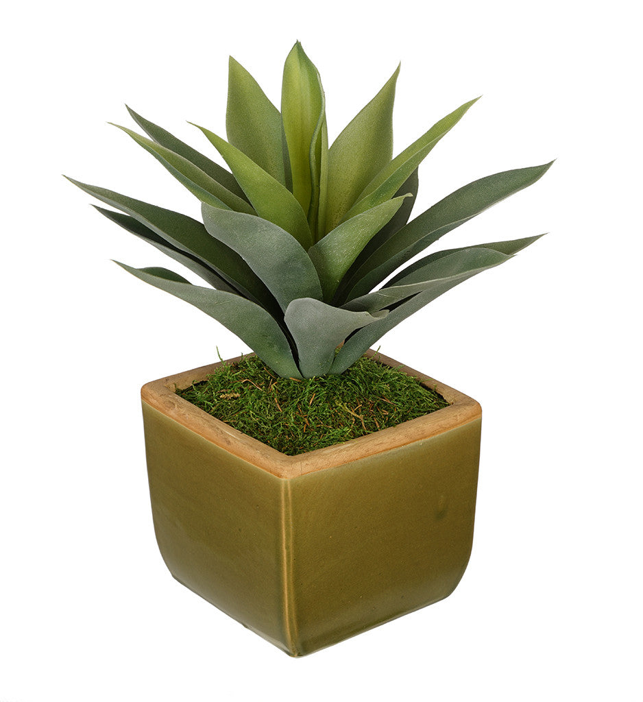 Artificial Succulent in Olive Green Ceramic Vase - House of Silk Flowers®  - 1