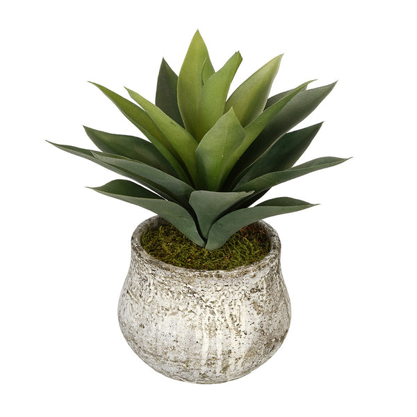 Artificial Succulent in Distressed Cement Vase