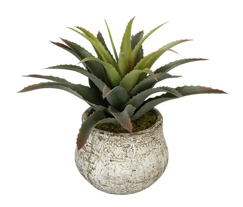 Artificial Star Succulent in Vase