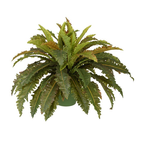 Artificial Birds Nest Fern