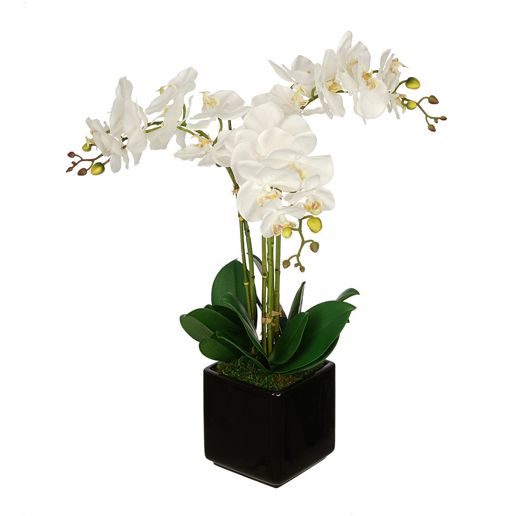 Artificial Triple Stem Orchid In Cube Vase House Of Silk