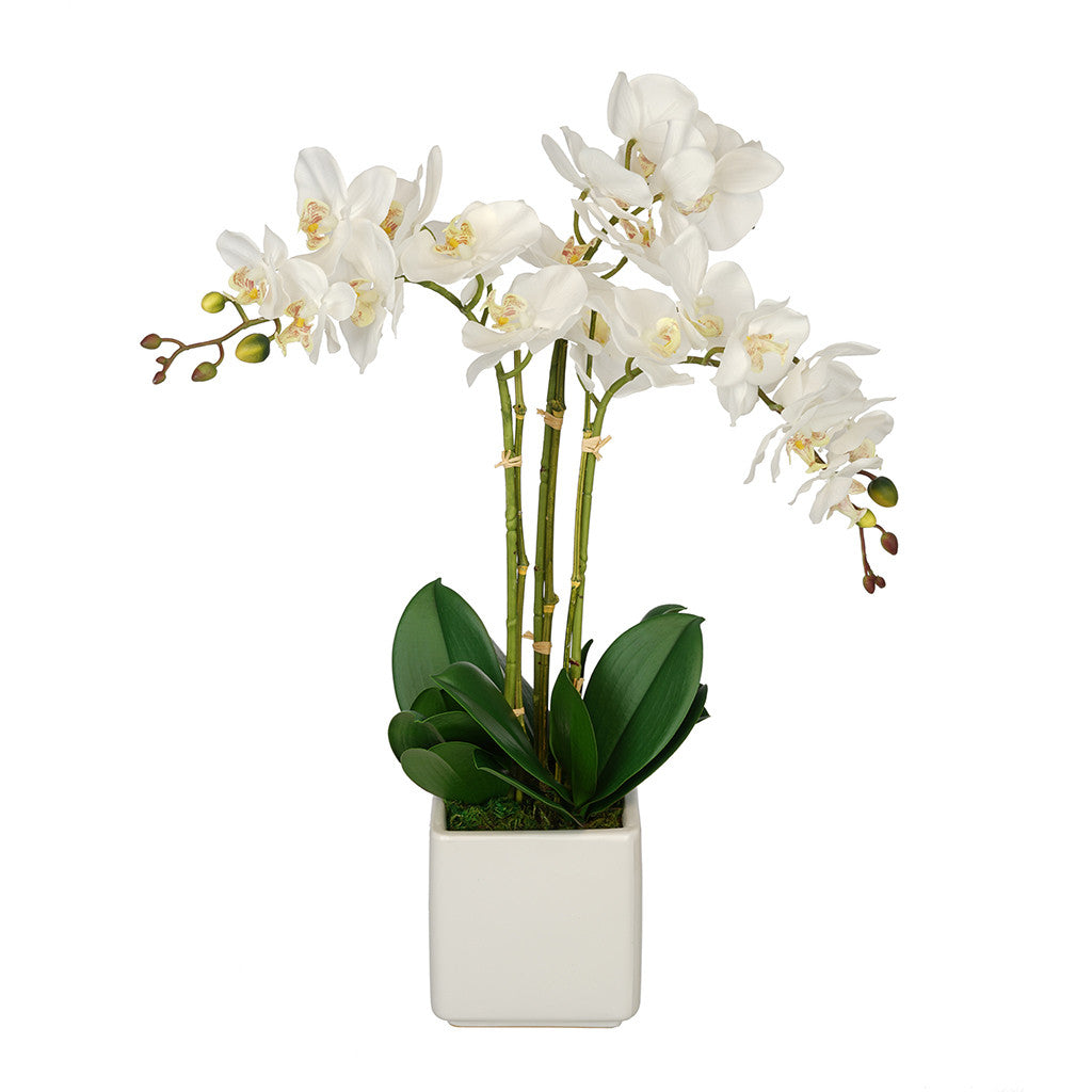 Artificial Triple Stem Orchid in Cube Vase