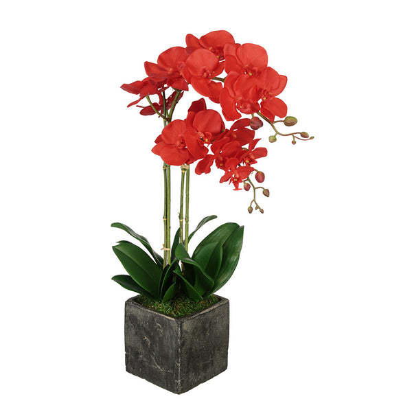 Artificial Double Stem Orchid in Large Stone Cube