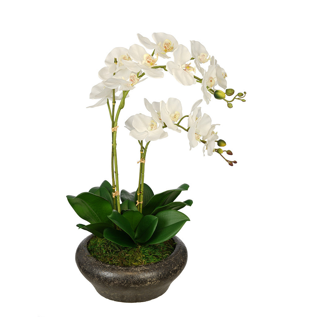Artificial Double Stem Orchid in Stone Bowl House of Silk Flowers®