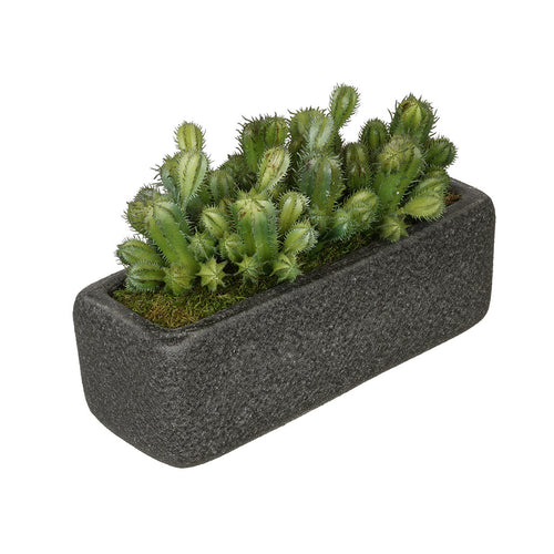 Artificial Thimble Cactus Garden in Sandy-Texture Rectangle