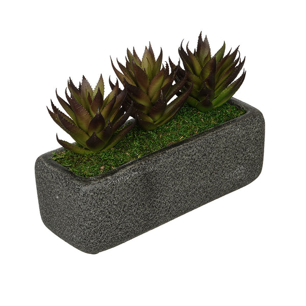 Artificial Aloe Garden in Sandy-Texture Rectangle