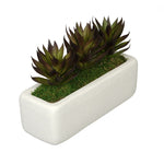 Aloe Garden in Sandy-Texture Rectangle House of Silk Flowers®