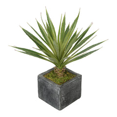 Baby Yucca in Grey Washed Ceramic Cube House of Silk Flowers®