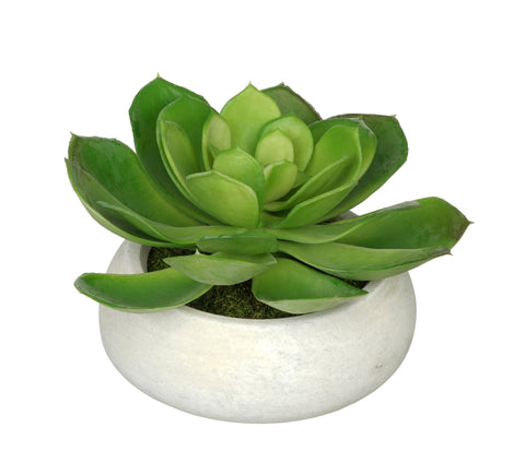 Artificial Echeveria in Washed Bowl Ceramic