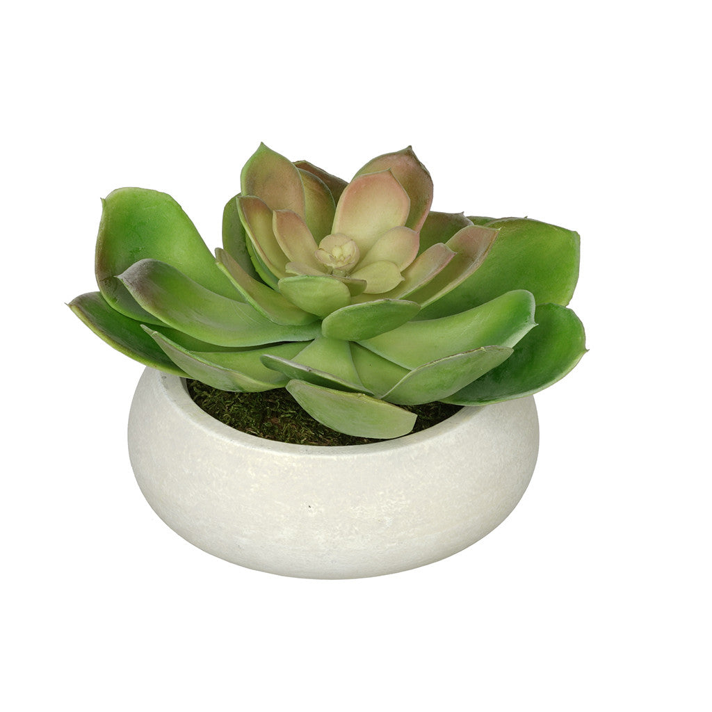 Artificial Echeveria in Washed Bowl Ceramic House of Silk Flowers®