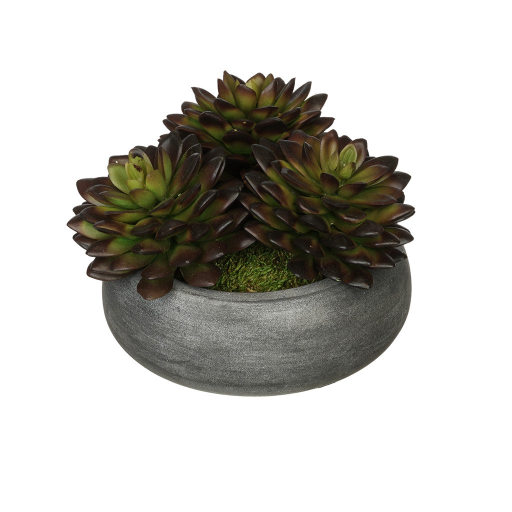 Burgundy Pointed Echeveria Garden in Grey-Washed Bowl Ceramic House of Silk Flowers®