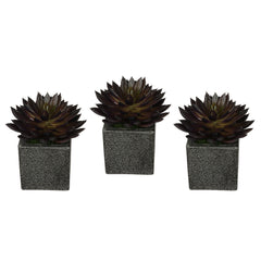 Artificial Pointed Echeveria in Sandy-Texture Cube Ceramic Trio