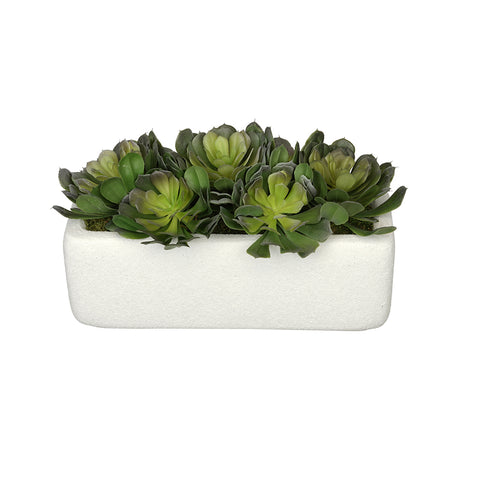 Artificial Aeoniums in Sandy-White Rectangle Ceramic Vase