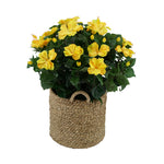 Artificial Yellow Hibiscus in Seagrass Basket