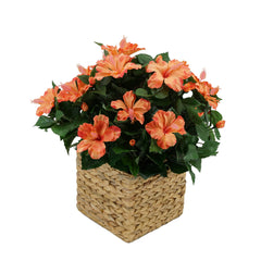 Faux Orange Hibiscus in Square Water Hyacinth Basket