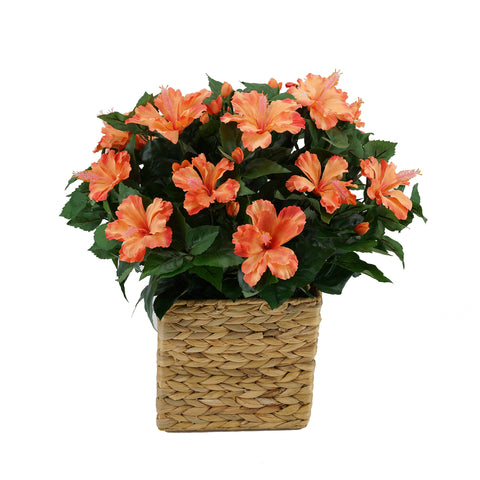 Faux Hibiscus in Square Water Hyacinth Basket