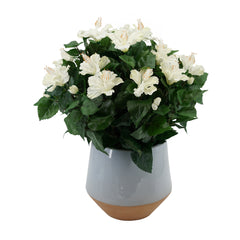 Faux Cream Hibiscus in Light Blue Designer Round Ceramic Vase