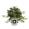 Faux Wandering Jew Plant in Gold/White Ceramic
