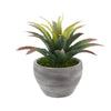 Faux Star Succulent in Grey-Washed Ceramic