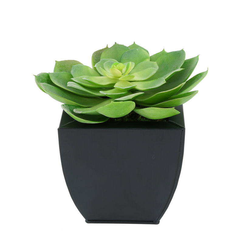 Faux Green Echeveria Succulent in Black Tapered Zinc Pot