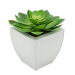 Faux Green Echeveria Succulent in Cream Tapered Zinc Pot