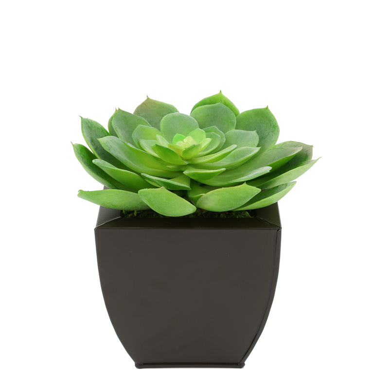 Faux Green Echeveria Succulent in Matte Brown Tapered Zinc Pot