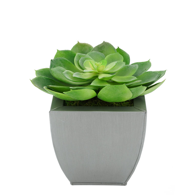 Faux Green Echeveria Succulent in Silver Tapered Zinc Pot