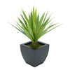 Faux Baby Yucca in Black Tapered Zinc Pot