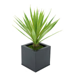 Faux Baby Yucca in Black Square Zinc Pot