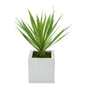 Faux Baby Yucca in Cream Square Zinc Pot