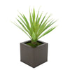 Faux Baby Yucca in Matte Brown Square Zinc Pot