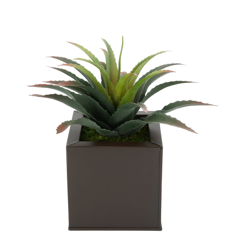 Faux Star Succulent in matte brown Square Zinc Pot