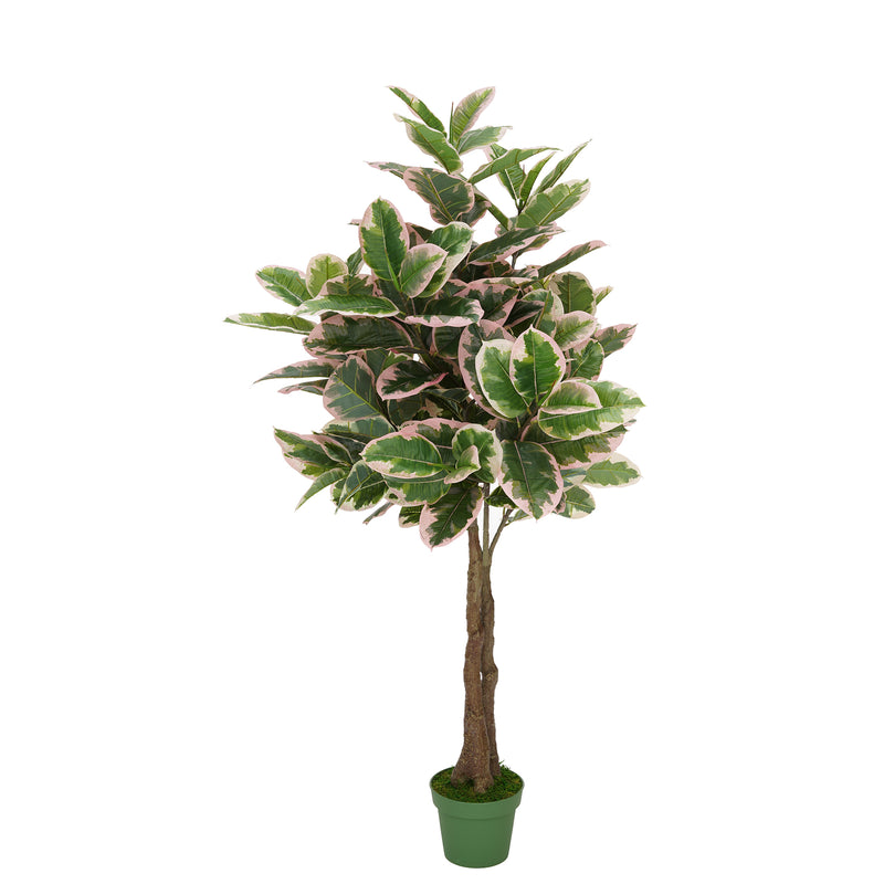 Faux 5ft Double Pink Edge Variegated Rubber Tree