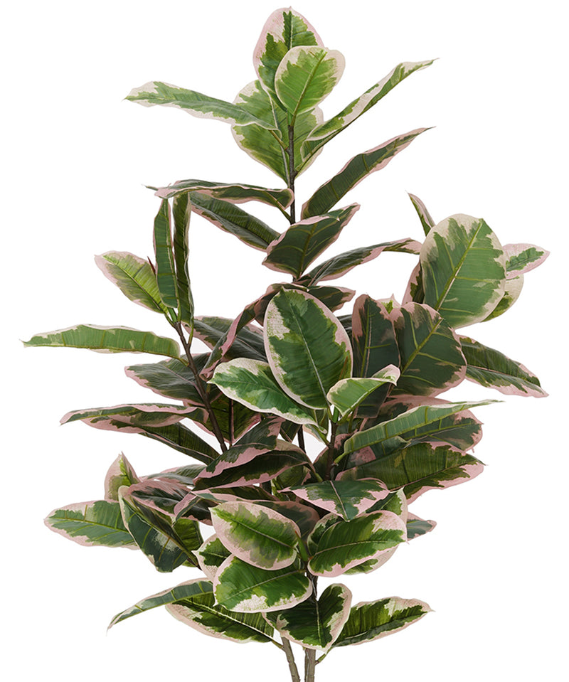 Faux 5ft Pink Edge Variegated Rubber Tree