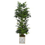 Faux 7ft Fishtail Palm Tree in White Crisscross Wood/Metal Planter