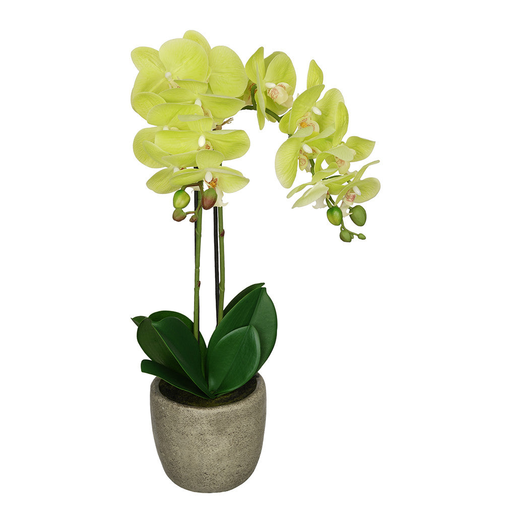 Artificial Citrus Green Double-Stem Orchid in Grey Stone-Look Vase