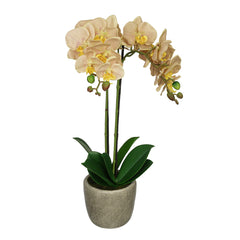 Artificial Veined Double-Stem Orchid in Grey Stone-Look Vase