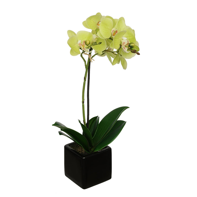 Citrus Green 18-inch Baby Orchid in Black Cube Ceramic House of Silk Flowers®