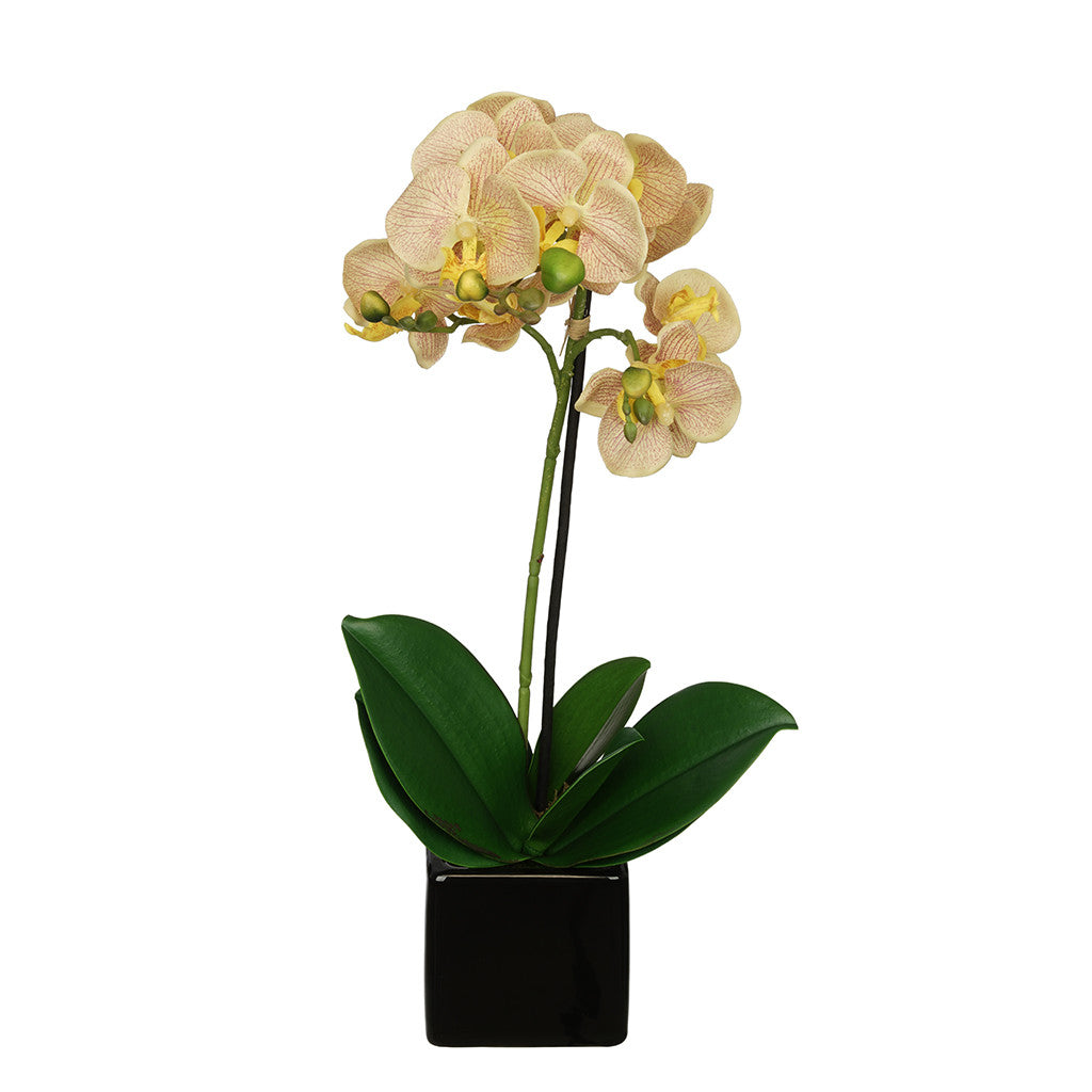 Veined 18-inch Baby Orchid in Black Cube Ceramic House of Silk Flowers®