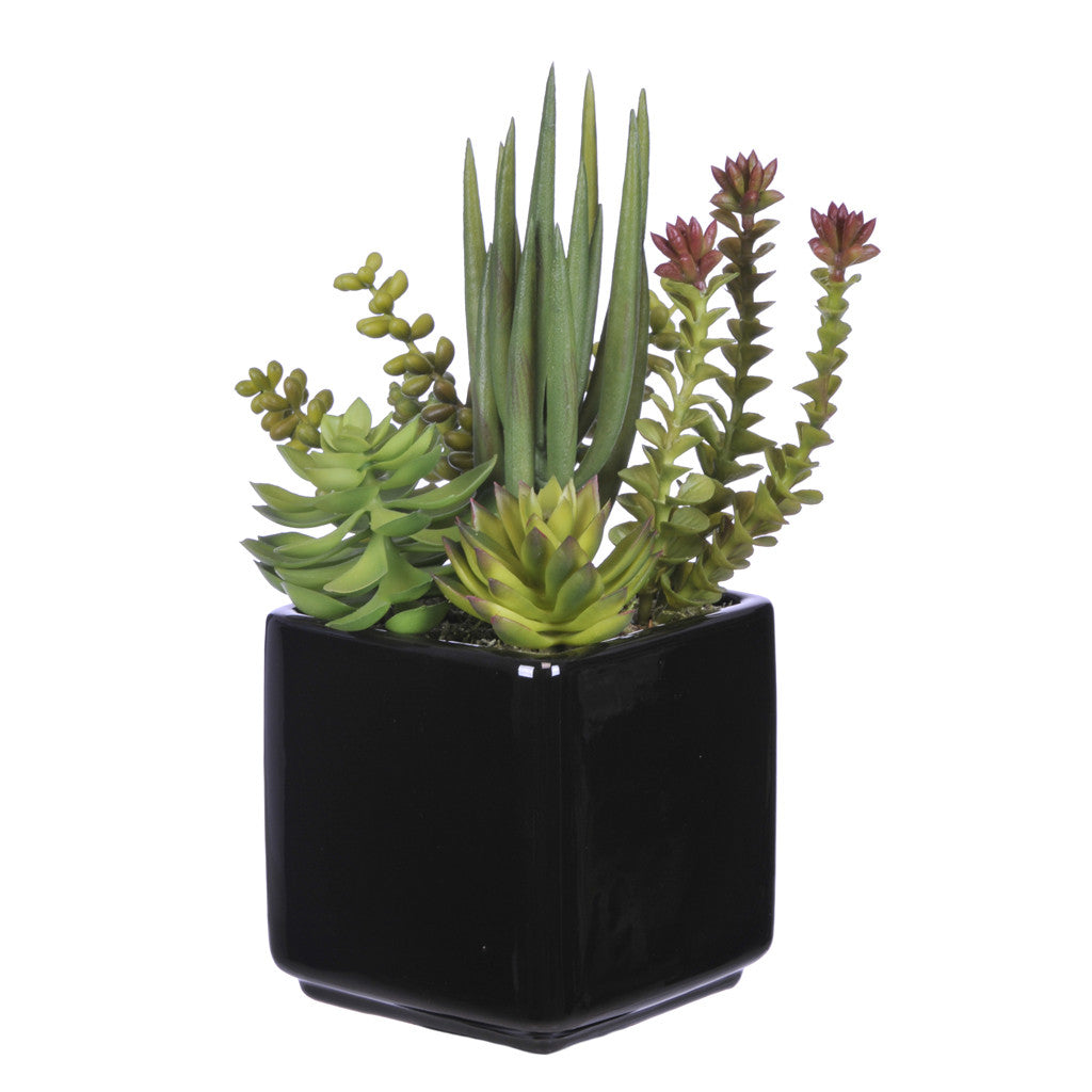 Artificial Succulent Garden in Cube Ceramic - House of Silk Flowers®  - 1