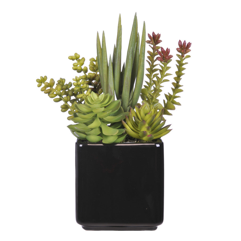 Artificial Succulent Garden in Cube Ceramic - House of Silk Flowers®  - 2