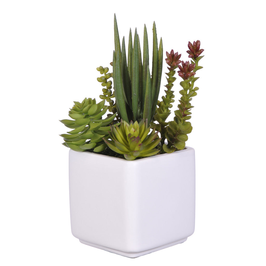Artificial Succulent Garden in Cube Ceramic - House of Silk Flowers®  - 3
