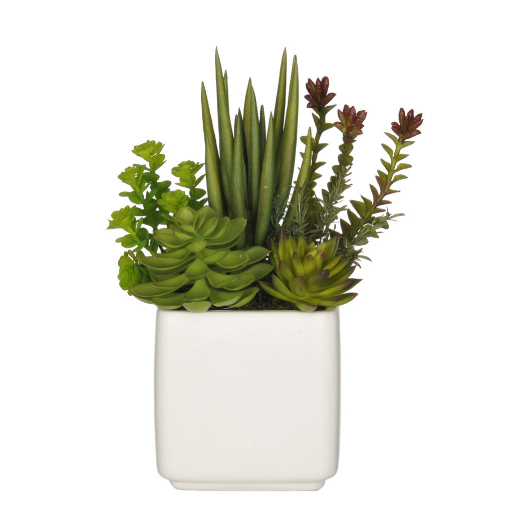 Artificial Succulent Garden in Cube Ceramic - House of Silk Flowers®  - 4