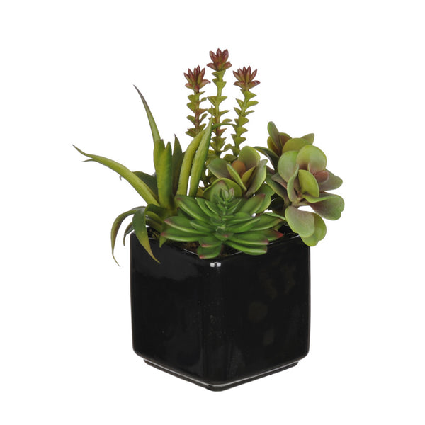 Artificial Succulent Garden in Cube Vase