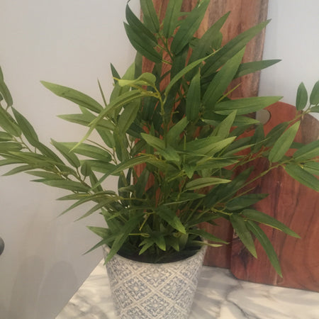 Potted Bamboo Plant
